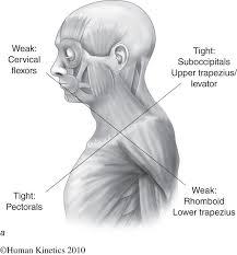 human anatomy for dummies choice image learn human anatomy image