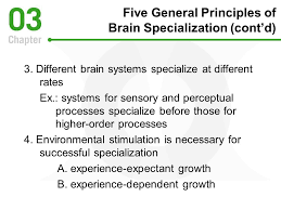 experience dependent brain growth chapter three tools for exploring the world physical perceptual