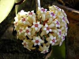 Fragrant Indoor Plants Low Light - best 25 exotic house plants ideas on pinterest flowering house