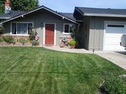 Shade Tree For Small Backyard - shade tree for small front yard