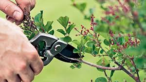 How To Do Landscaping by Pruning Landscape Shrubs And Bushes For Shape And Form How To Do