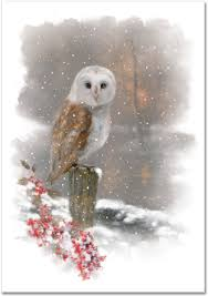 winter owl small boxed cards cards greeting