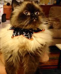 halloween inlander staff cats in costume bloglander