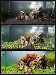 Aquascape Nj 497 Best Aquascaping And Tanks Images On Pinterest Aquarium