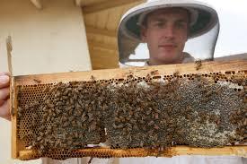 backyard beekeeping ok u0027d by city of los angeles u2013 daily news