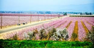 california blossom trail california grown