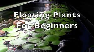 25 native plants for the floating plants for beginners youtube