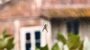How To Keep Spiders Out Of Your Bed 9 Ways To Spider Proof Your Home Bt