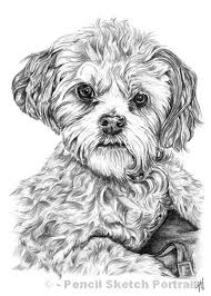 dog drawings pencil sketches of dogs and puppies for sale