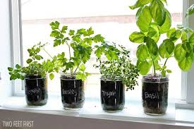 indoor herb garden twofeetfirst