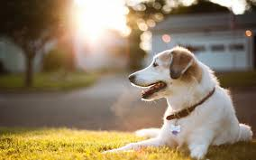 cute dog wallpapers cute dog wallpaper