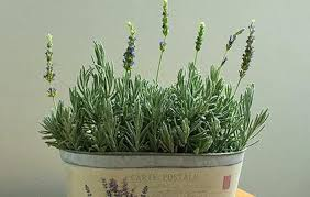 Fragrant Indoor House Plants - bring the garden indoors with fragrant houseplants white flower