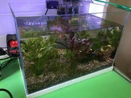 aquascape aquarium pets for sale in malaysia mudah my