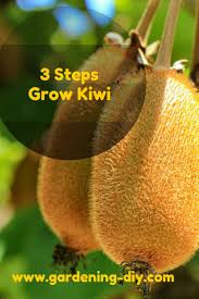21 best kiwi fruit images on kiwi fruit and garden