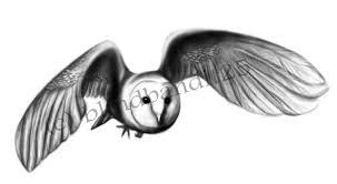tribal owl tattoo barn owl tattoo request by semperferus on deviantart