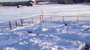 bluetick coonhound names build a snow maze for your dogs dogtime