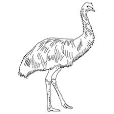 10 emu coloring pages toddlers