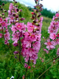 native idaho plants programs natural resources native plant communities about