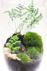 best 25 glass terrarium ideas on pinterest terrarium diy
