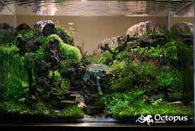 Aquascaping Guide Aquascaping Archives Ron Beck Designs