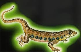 Seeking Lizard Episode Shukernature The Lightbulb Lizard Of Benjamin Shreve