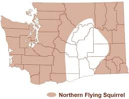 Map Of Counties In Washington State by Western Gray Squirrels And Other Squirrels Of Washington