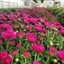 marshall u0027s gardens home facebook