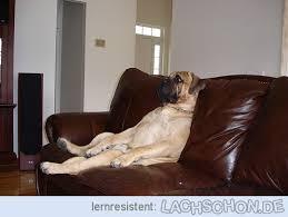 sofa fã r hunde fauler hund faul sofa hund hunde