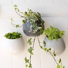 plant stand wall mounted plant holders metal cone metalwall