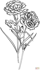 carnation flowers coloring page free printable coloring pages