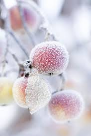 26 best facts about frost images on pinterest weather news