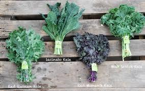 comment cuisiner le chou kale chou kale un chou vert et frisé