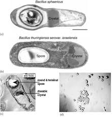 microorganisms in biological pest control u2014 a review bacterial