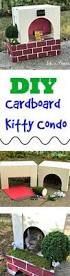 Outdoor Cat Condo Plans by Best 25 Kitty Condo Ideas On Pinterest Diy Cat Tower Cat Condo