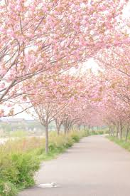 best 25 pink trees ideas on pink nature trees