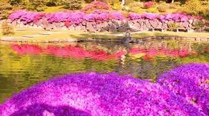 most beautiful flower gardens in the world decorating clear