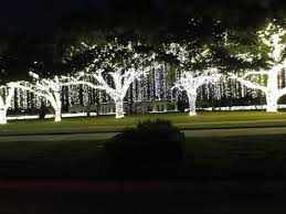 Decorate Palm Trees With Christmas Lights by Christmas Lights Paul Michaels