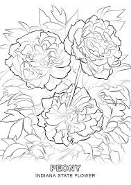 delaware state flower indiana state flower coloring page free printable coloring pages