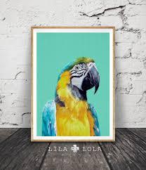 Parrot Decorations Home Tropical Bird Print Parrot Wall Art Bird Photography Macaw
