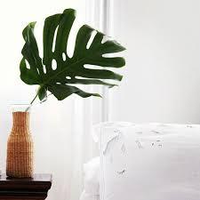 une plante dans une chambre créer une déco minimaliste chic avec des plantes exotiques plante