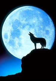 wolf howling at the moon olympic tub
