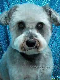 Dog Grooming Styles Haircuts Pet Grooming The Good The Bad U0026 The Furry Different Looks Of A