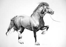 midland welsh pony u0026 association