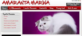 studio persiani studio altresi hello cats
