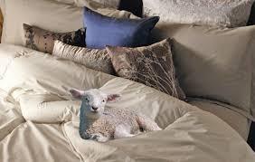 Woolen Duvet How To Sleep Like A Lamb The Benefit Of A Pure Wool Duvet