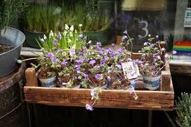 local flower shops hello store spotlight your local flower store skimbaco