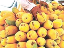Mango King king of fruits exporters taking pre emptive steps ahead of mango