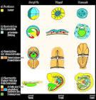 Evolution: Biologie; Experten: Biogenetisches Grundgesetz - Geschichte
