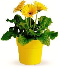 Indoor Flower Plants Indoor Air Purifying Plants Top 10 Air Purifying Plants To Have