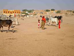 thar desert animals jaisalmer camel safari a travelers guide forever roaming the roads